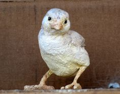 Baby Chick made with paper mache clay