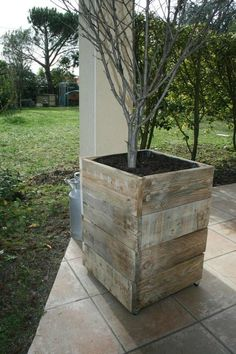 Planter for mango tree