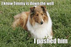 Awwww Lassie