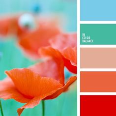 love coral and cyan