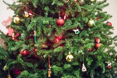 This year, I heard that Beech Nursery in Toronto were running a Christmas Tree delivery service through Inabuggy grocery deliveries. Christmas Tree Delivery, Toronto, Nursery, Events, Seasons, Holiday Decor, Babies Rooms, Seasons Of The Year, Baby Room