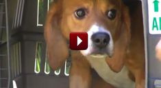 I'm Almost In Tears!  This Rescued Dog's Reaction To Seeing Grass For The First Time Is Priceless!