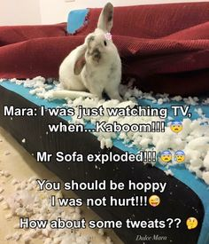 The sofa exploded!