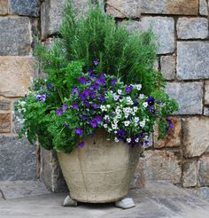 herb pot with rosemary, parsley and forget-me-not