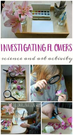 Invitation to Examine and Draw Flowers – The Imagination Tree Exploring and drawing flowers activity tray for preschoolers Drawing Activities, Nature Activities, Science Activities For Kids, Preschool Science, Spring Activities, Learning Activities, Preschool Activities, Science Nature, Science Area
