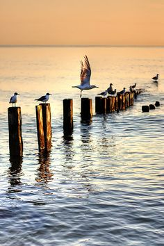 Seagulls | Flickr - Photo Sharing!