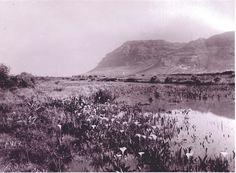 Vleis of the Cape Flats Cape Town South Africa, My Land, African History, Old Photos, Black And White, Landscape, City, Nordic Walking, Future