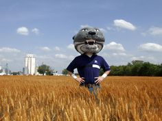 Wildcat Wheat we invented it we don't wave it.