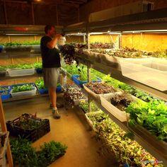 Tropical vivarium plants