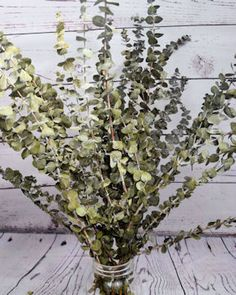 Nothing beats the deliciously fresh smell of Eucalyptus.  Naturally aromatic, it can freshen up your whole living space, and it is beautiful too.  I like to mix preserved eucalyptus with other dried flowers and some natural curly ting ting and place the arrangement in a vase or decorative basket.  It also is a statement piece on its own and comes in many colors to fit your decorating palette.   #driedflowers #eucalyptus #flowerarrangement #homedecor
