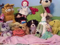 lacey in a pile of plush