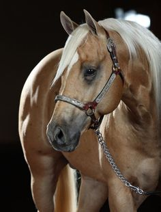 Hair coats that glow... and much more. Achieve cellular health. #omega369 #aqhaproud Discover us. www.o3animalhealth.com