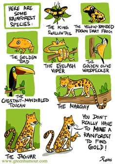 Green Humour: conservation of big cats