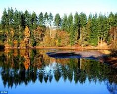 autumn park europe - Pesquisa Google