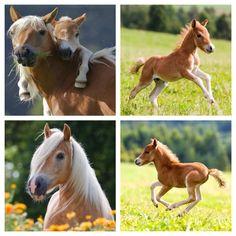 Horses great cute pic stich