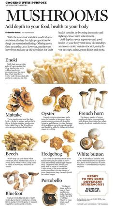 They do this because this is the easiest way to grow mushrooms. But if you are thinking of growing mushrooms commercially Edible Mushrooms, Stuffed Mushrooms, Wild Mushrooms, Cooking Tips, Cooking Recipes, Healthy Recipes, Mushroom Varieties, Growing Mushrooms, Food Facts