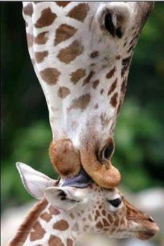 motherhood series