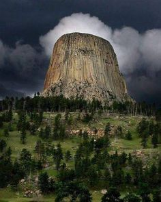 Devils Tower, Wyoming - an old silicon tree that has been cut...