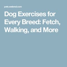 Dog Exercises for Every Breed: Fetch, Walking, and More