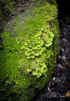 Moss......