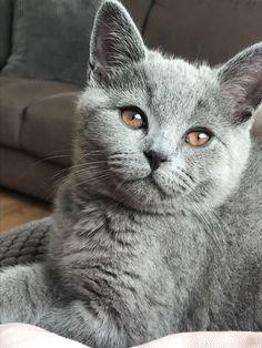 My 3 months old kitten http://ift.tt/2w0BcPz