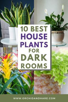 10 Low Light House Plants | Indoor Plants That Grow Without Sunlight