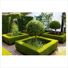 Small formal garden with clipped box hedging, Laurus nobilis standards and Lathyrus - Image No: 0171138 - GAP Gardens, garden and plant stock photography Small Formal Garden Ideas, Formal Garden Design, Garden Landscape Design, Garden Landscaping, Small Rose Garden Ideas, Formal Gardens, Small Gardens, Front Gardens, House Gardens