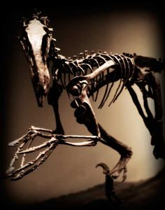 Deinonychus is a genus of carnivorous dromaeosaurid coelurosaurian dinosaurs, with one described species, Deinonychus antirrhopus. This species, which could grow up to 3.4 metres (11 ft) long, lived during the early Cretaceous Period, about 115–108 million years ago.