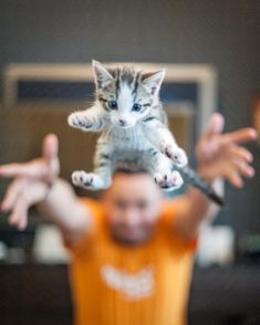 The Best Cat And Dog Photos Of The Day