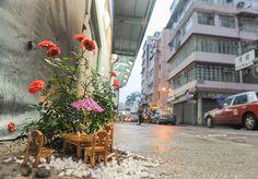 Artista tapa buracos nas ruas da cidade plantando mini jardins