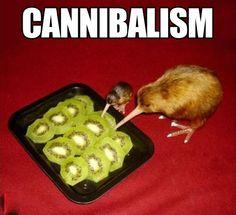 Kiwi eating kiwi… THE BABY KIWI!!!