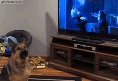 German shepherd howling with wolves from Zootopia | Gif Finder – Find and Share funny animated gifs