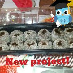 Nuevo proyecto! Tomates plantados en turba prensada.