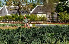 The Babylonstoren Garden South Africa. Stretching over eight acres, our formal Garden contains almost every kind of fruit, herb and vegetable imaginable, intersected by walkways, private gardens and pergolas of sweet–scented climbing roses.