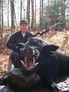 OK - I really had no idea boar are THAT big! But I doubt it attacked first so therefore it was shot for fun, terrible, sick fun Boar Hunting, Big Game Hunting, Trophy Hunting, Hunting Tips, Turkey Hunting, Hunting Season, Hunting Stuff, Pro Hunters, Feral Pig