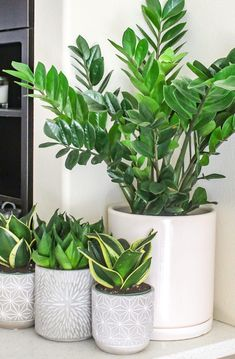 ZZ Plant and Snake Plants - Top 8 low maintenance house plants for beginners - M. ZZ Plant and Sna Low Maintenance Indoor Plants, Low Maintenance Garden, Best Indoor Plants, Indoor Garden, Indoor House Plants, Outdoor Plants, Plants In The House, Plants For Patio, Plants For Kitchen