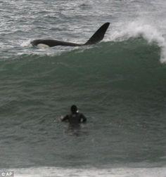 killer whale - Google Search