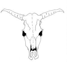 How to Draw a Cow Skull for Georgia O'Keeffe