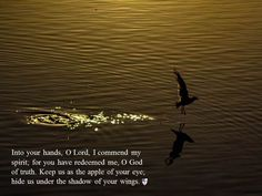 Into your hands, O Lord, I commend my spirit; for you have redeemed me, O God of truth. Keep us as the apple of your eye; hide us under the shadow of your wings. ~ The Book of Common Prayer, Compline