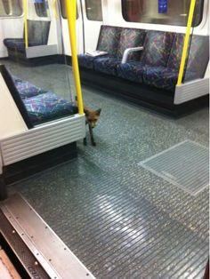 clever ist der Fuchs