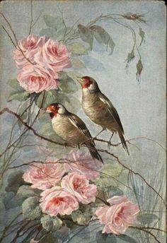 Aves  e  Rosas.  Perfeito!