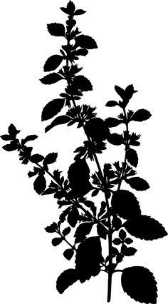 Lemon balm (silhouette)