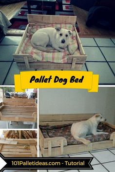 1000 Images About Our Dog On Pinterest Crate Training