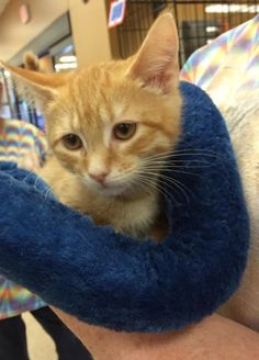 Opt to Adopt: Sweet Cat Greg, Jr. Will Bring Orange Goodness to You – Easley, SC | Brian's Home