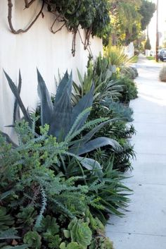 This looks similar to work Gregory Davis & Associates has done for their clients! Talk about curb appeal :) If you LOVE succulents and you'd like your whole Los Angeles landscape designed by us, go to: http://www.gdalandscape.com