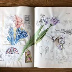 GiacoMina Ferrillo (@giacominaferrillo) • Instagram photos and videos Visual Journals, Floral Designs, Knowledge, Pencil, Pastel, Museum, Ink, Photo And Video, Instagram