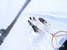 Sleehonden-tocht in Ruka, Finland #sleehondentocht #finland #scandinavie