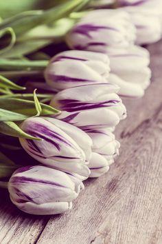 Tulips on wooden background by Alena Haurylik on 500px