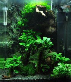 Layout 39 - Tropica - Tropica Aquarium Plants