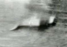 A collection of Nessie sightings over the years. The ever elusive Nessie has…